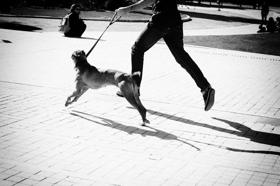 человек, собака, вместе, Slowhill