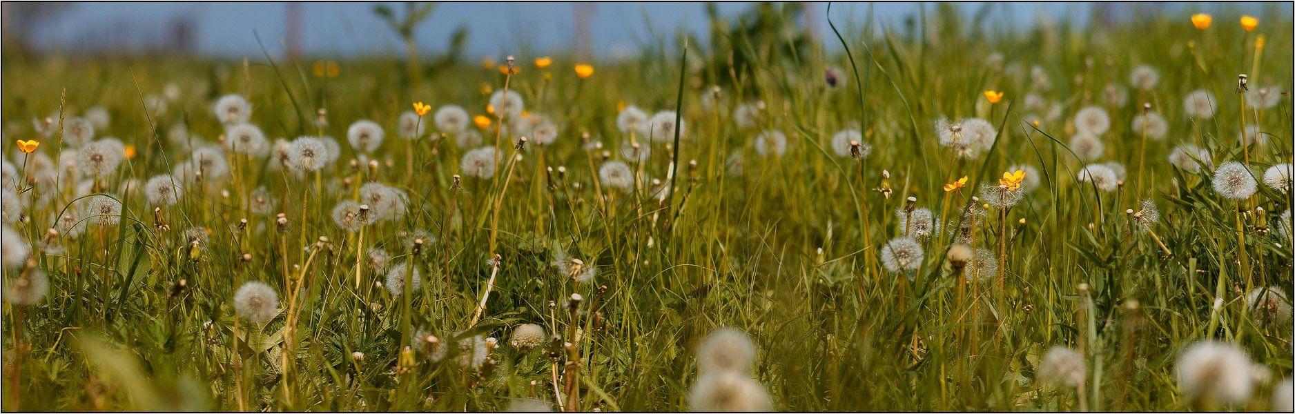 дон, луг, трава, весна, wofa