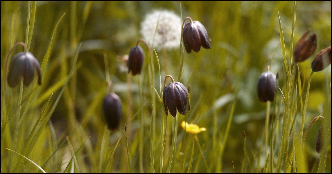 дон, лагутник, ростов-на-дону, цветы, луг, весна, дельта, wofa