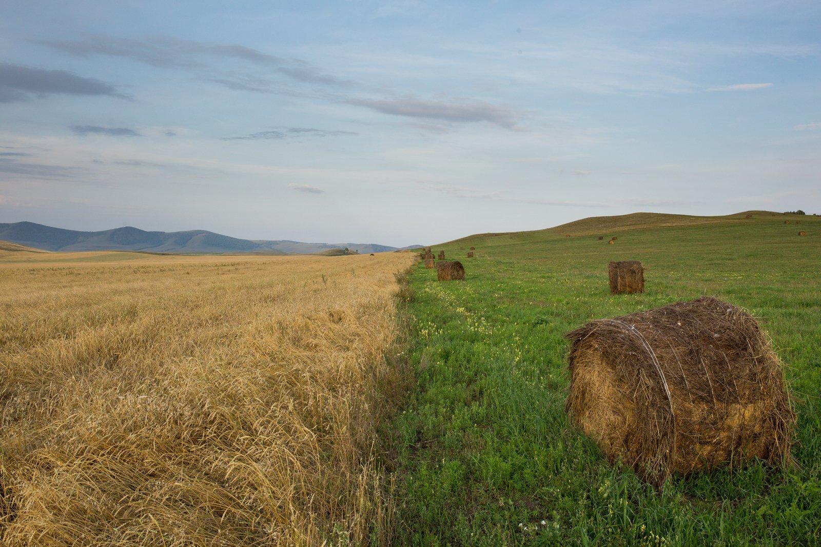Зеленый, Лето, Пейзаж, Поле, Природа, Сено, Уборка, Хакасия, Александр Нерозя