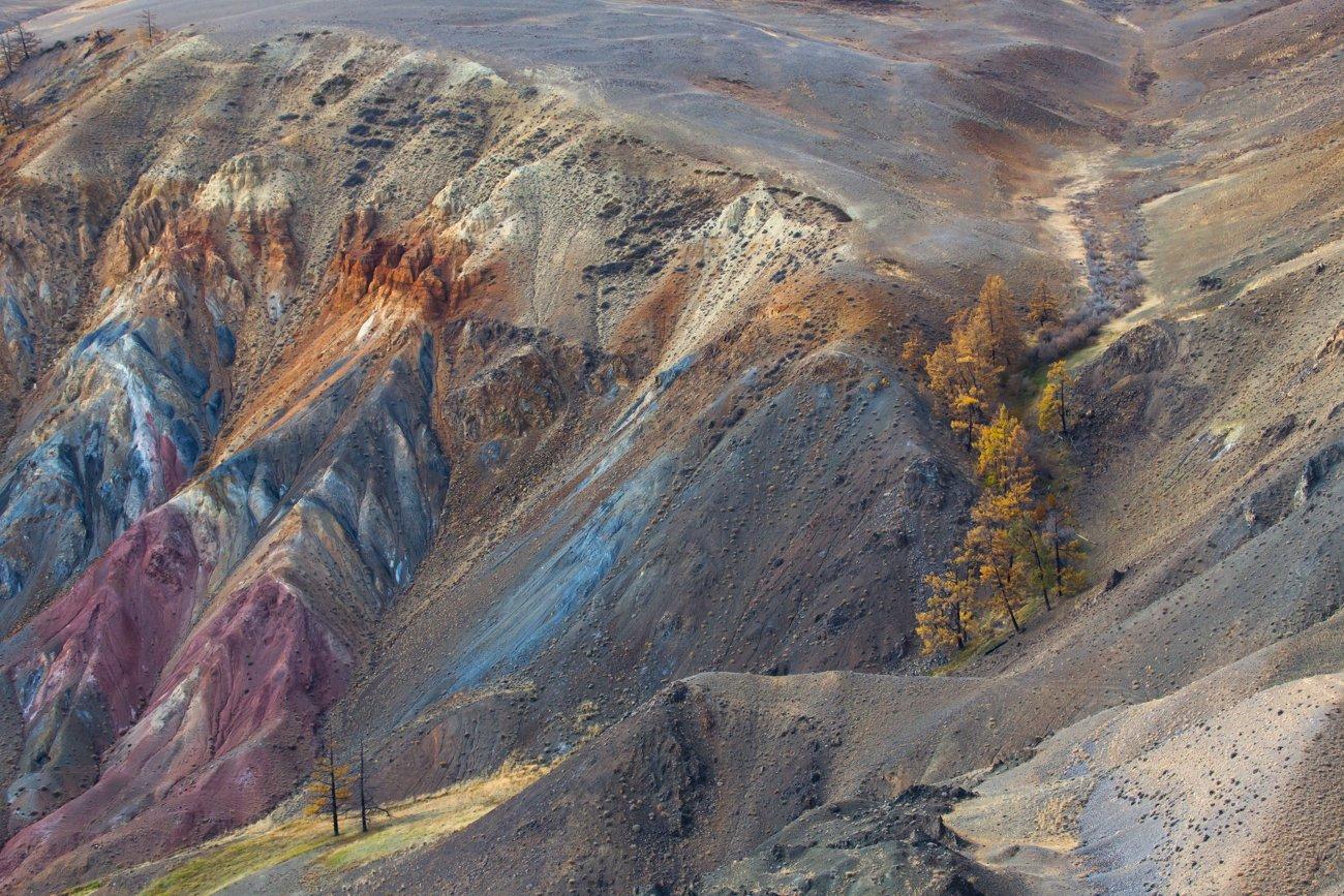 алтай, кызыл-чин, марс,цветная глина, цветные горы, лиственница,деревья, Ирина Назарова