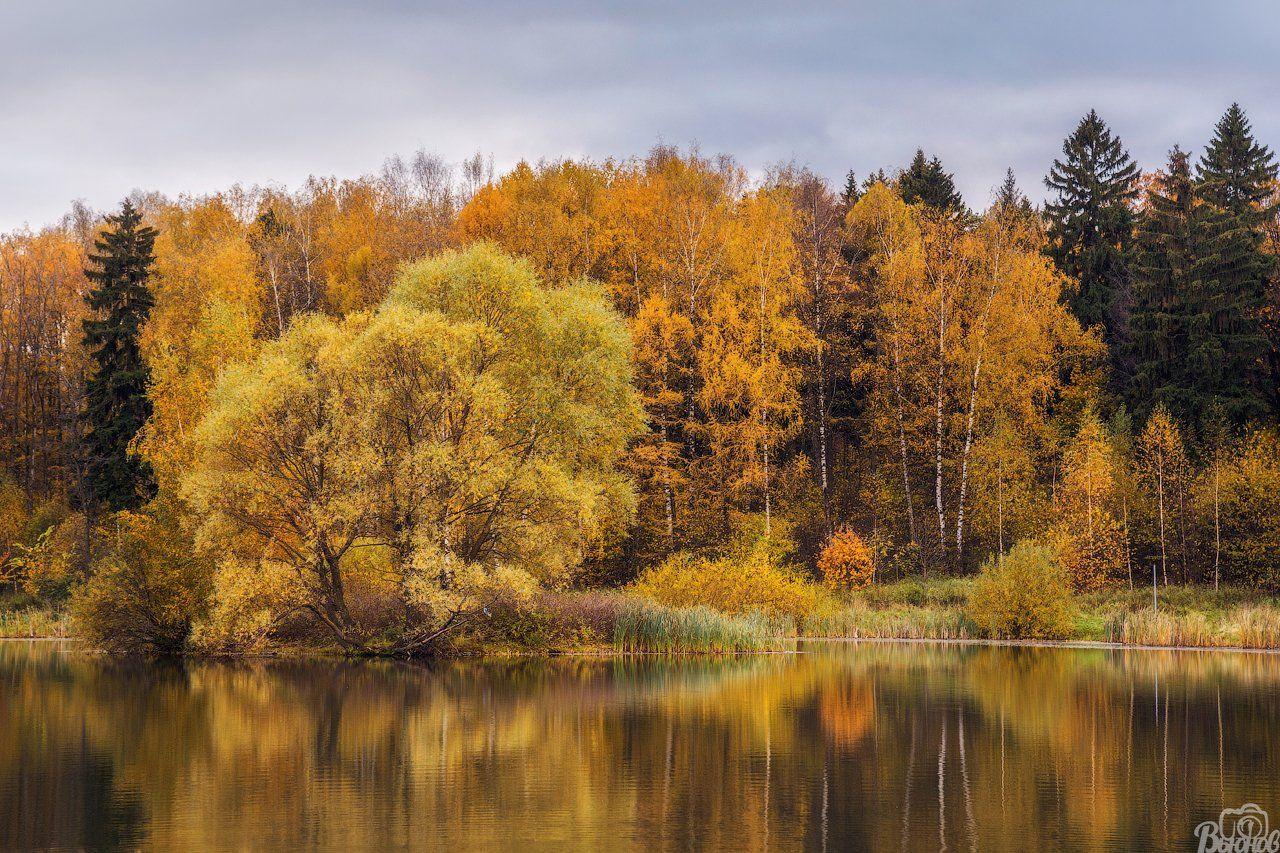 Долгие пруды, Долгопрудный, Московская область, Осень, Подмосковье, Вьюнов Сергей