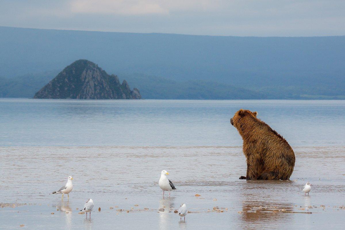 камчатка, медведь, озеро, фототур, путешествие, природа,, Денис Будьков