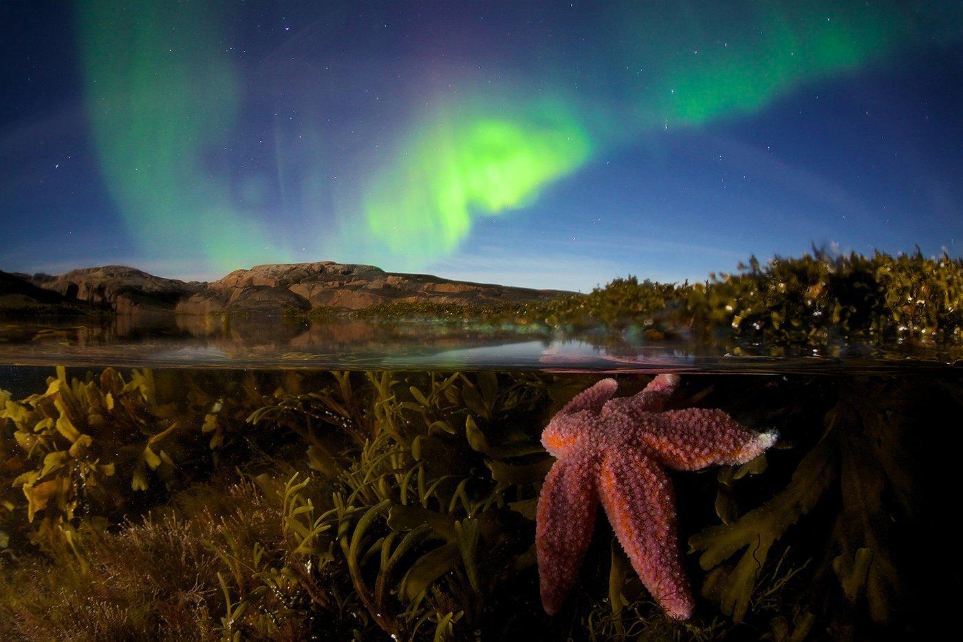 северный ледовитый океан звезда подводная съемка сплит полярное сияние звезды побережье водоросли, Никифоров Егор