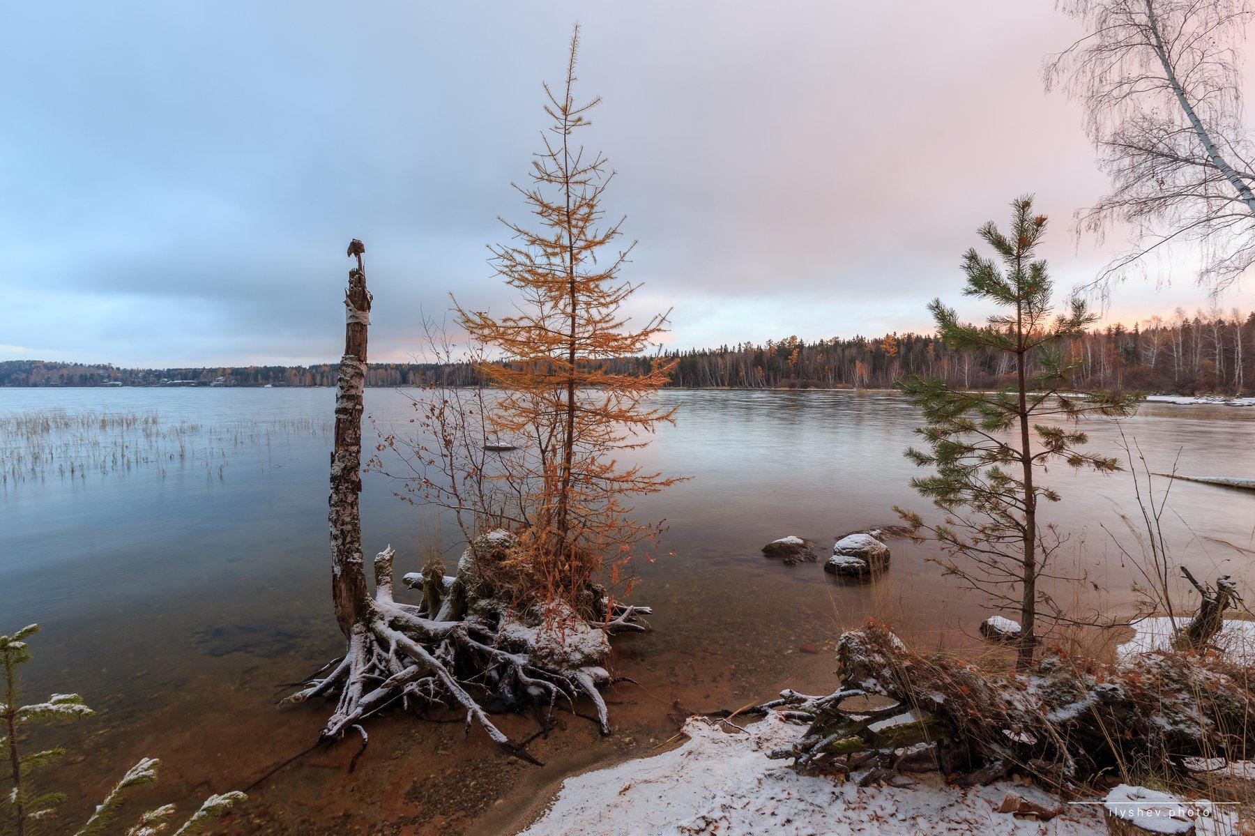 рассвет, озеро, свет, елка, островок, лиственница, пейзаж, природа, урал, россия, Дмитрий Илышев
