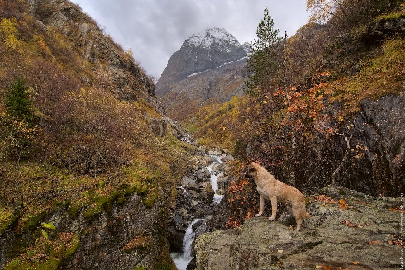 собака,ущелье,кавказ,горы,река,домбай,осень,скала,водопад, Горшков Игорь