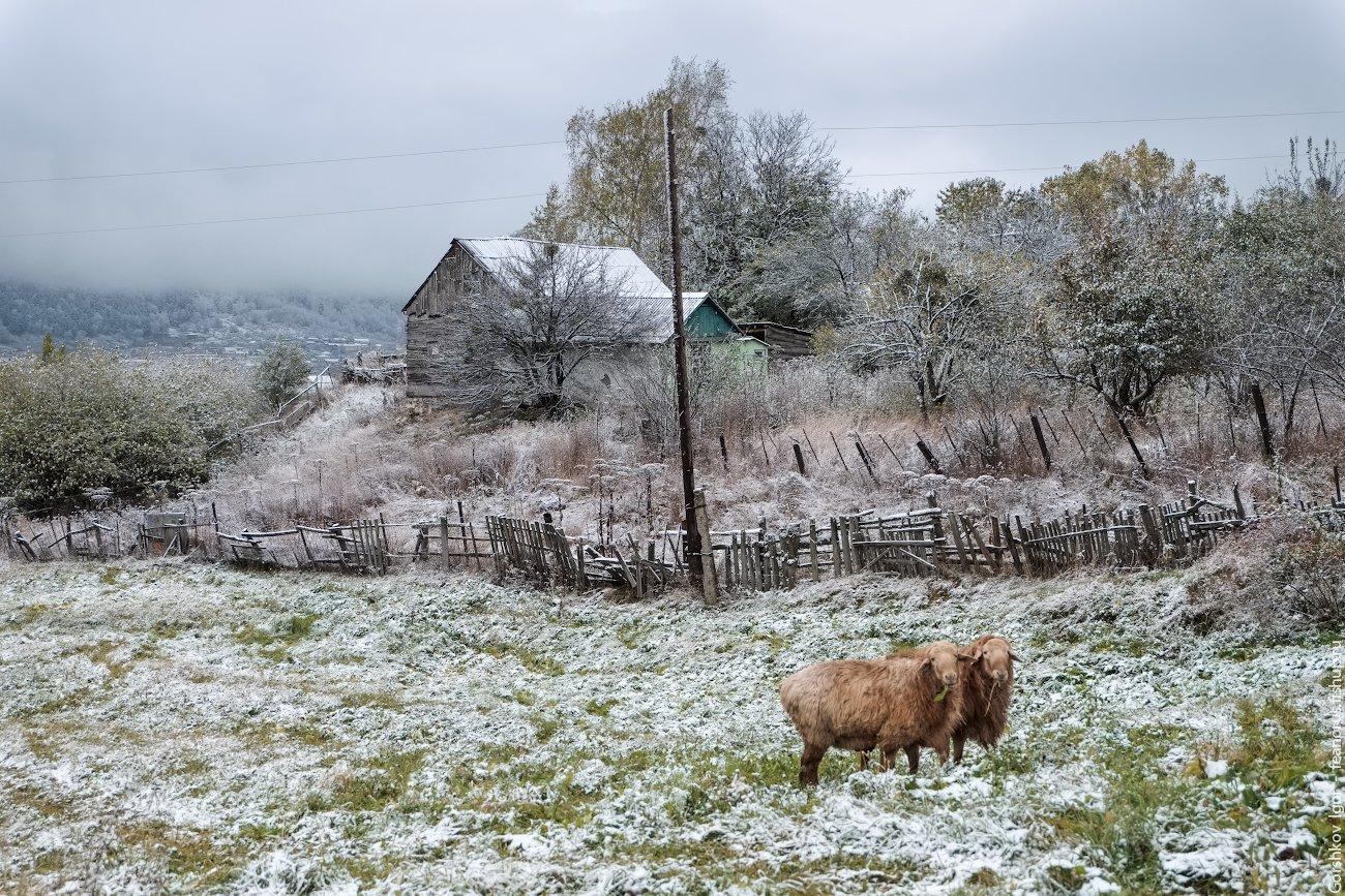 теберда,горы,село,овцы,снег,осень,утро,пейзаж, Горшков Игорь