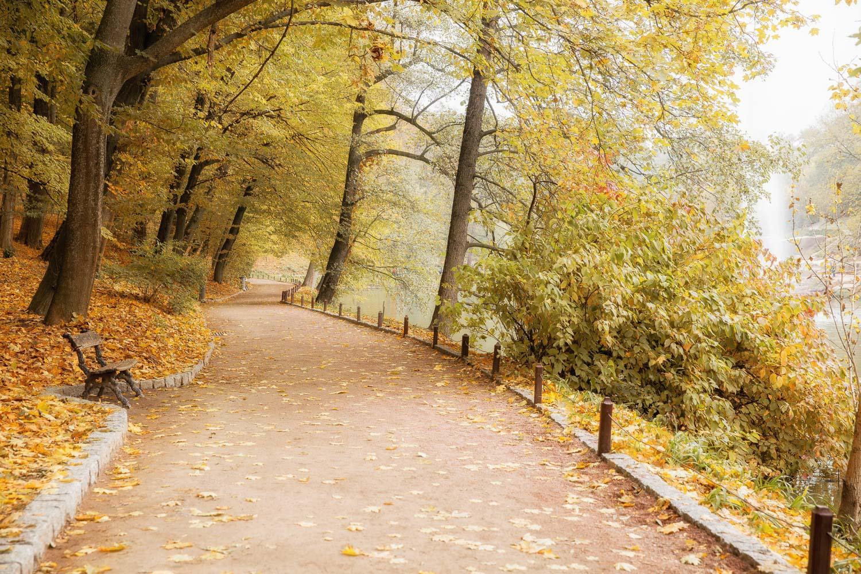 осень, парк, Умань, Софиевка, листья, аллея, скамейка, Илья Беленький