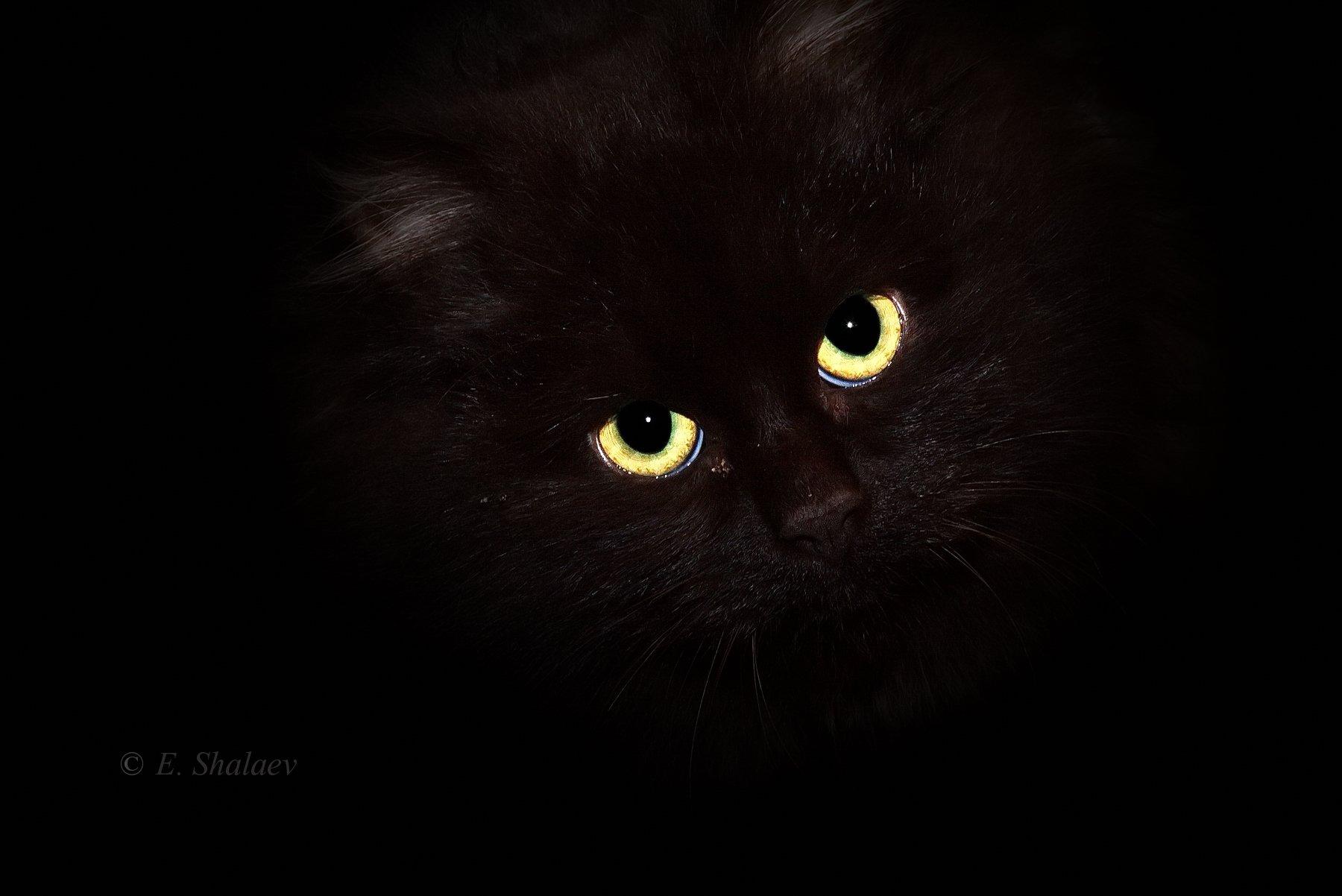 кот, Евгений