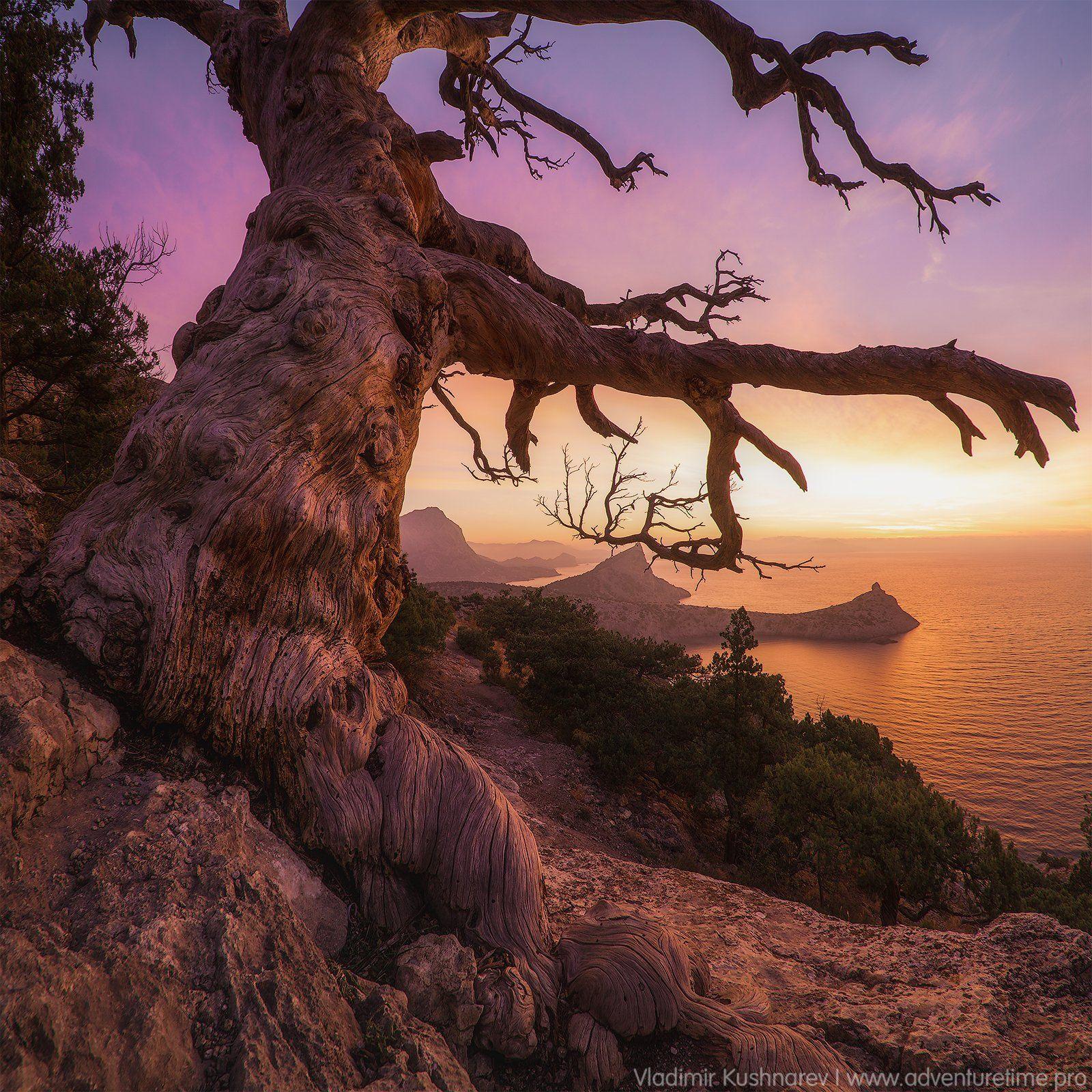 дерево, пейзаж, крым, новый cвет, рассвет, море, мыс капчик, Vladimir Kushnarev