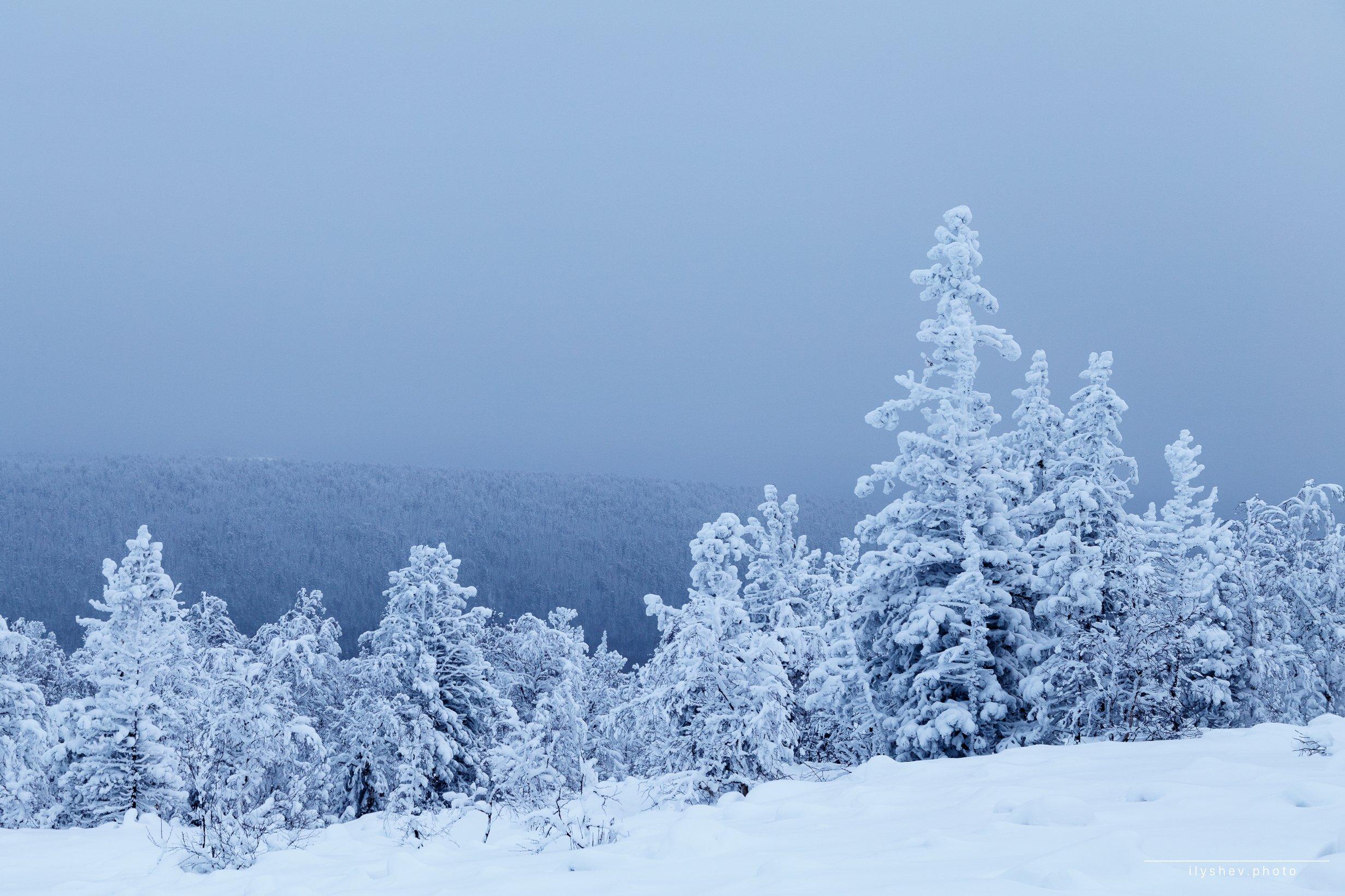 природа, пейзаж, зима, снег, елки, урал, россия, ГУХ, северный урал, Дмитрий Илышев
