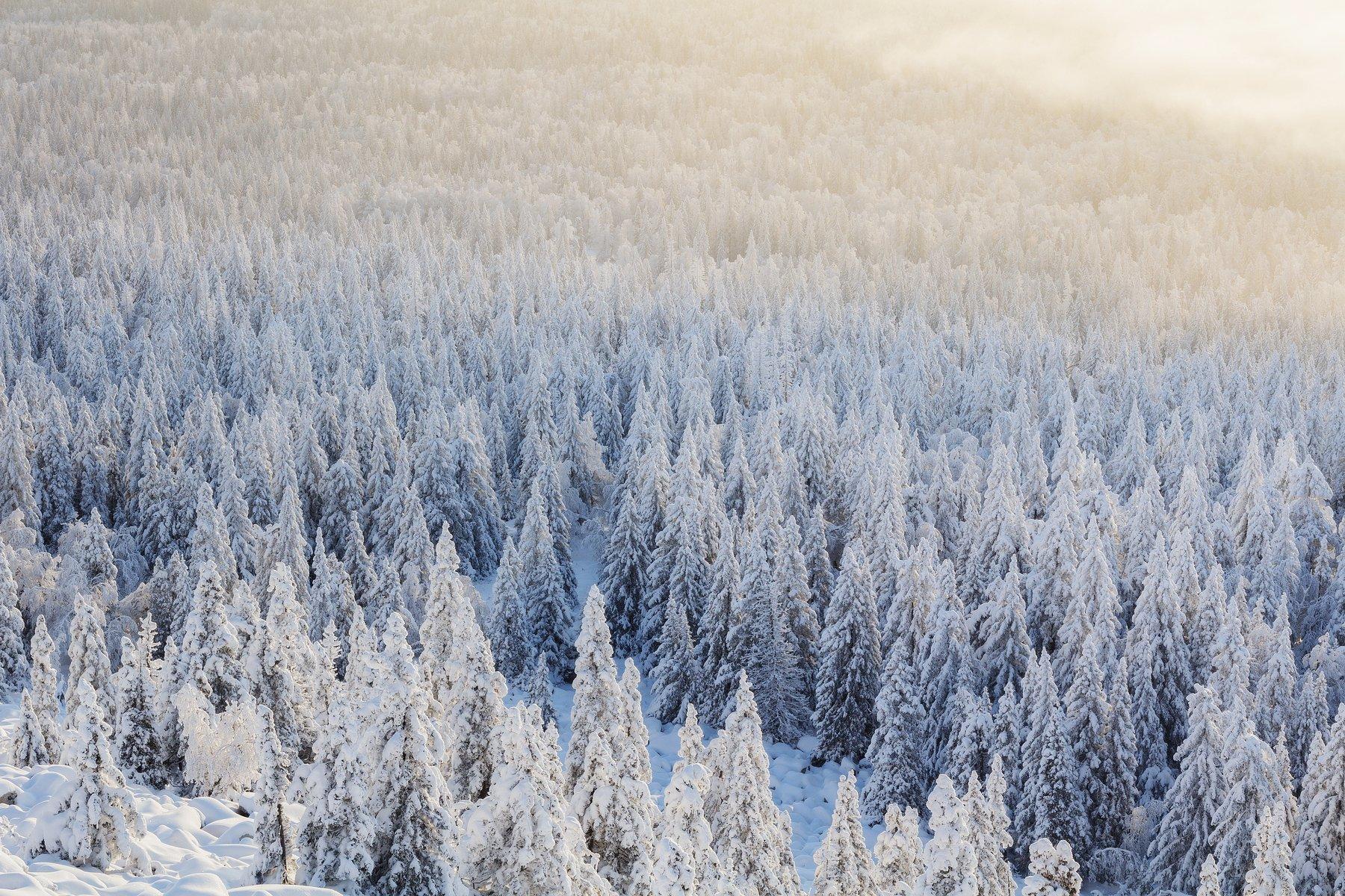 урал, южный урал, лес, зимний лес, зюраткуль, Сергей Гарифуллин