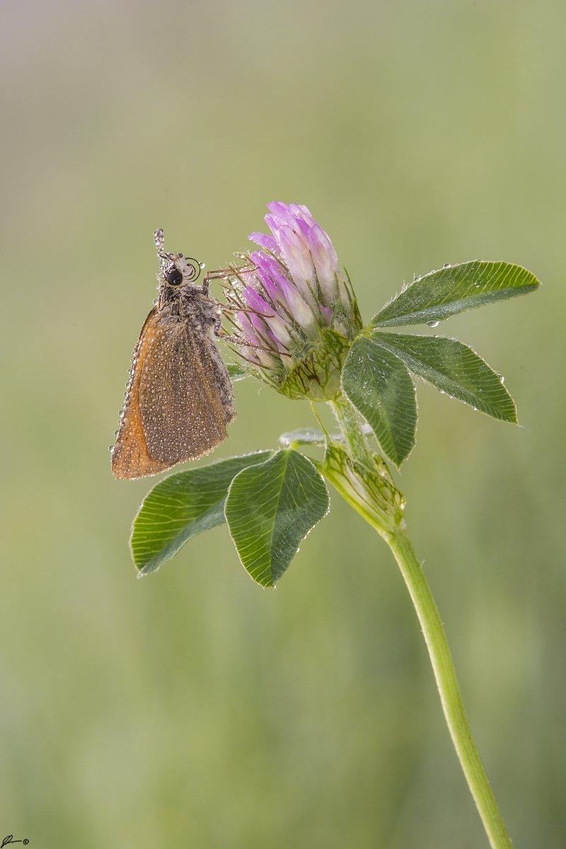 macro, makro, insect, wildlife, nature, butterfly,, Mariusz Oparski