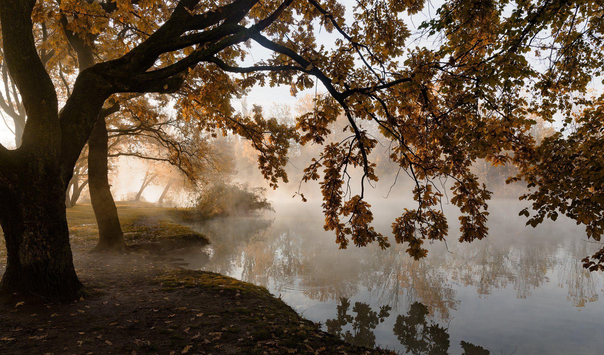 туман , свет , осень, Александр Плеханов