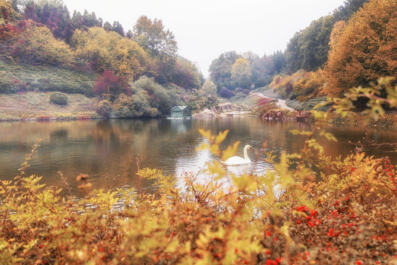 осень, парк, Умань, Софиевка, листья, озеро, лебедь, Илья Беленький
