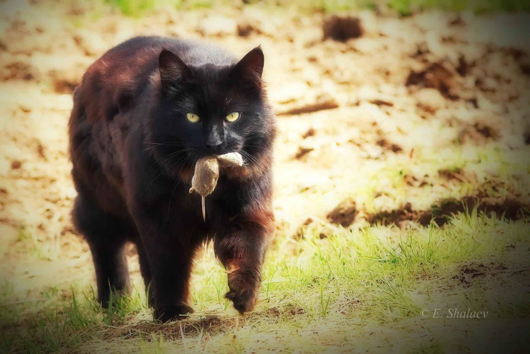 кот,кошка, Евгений