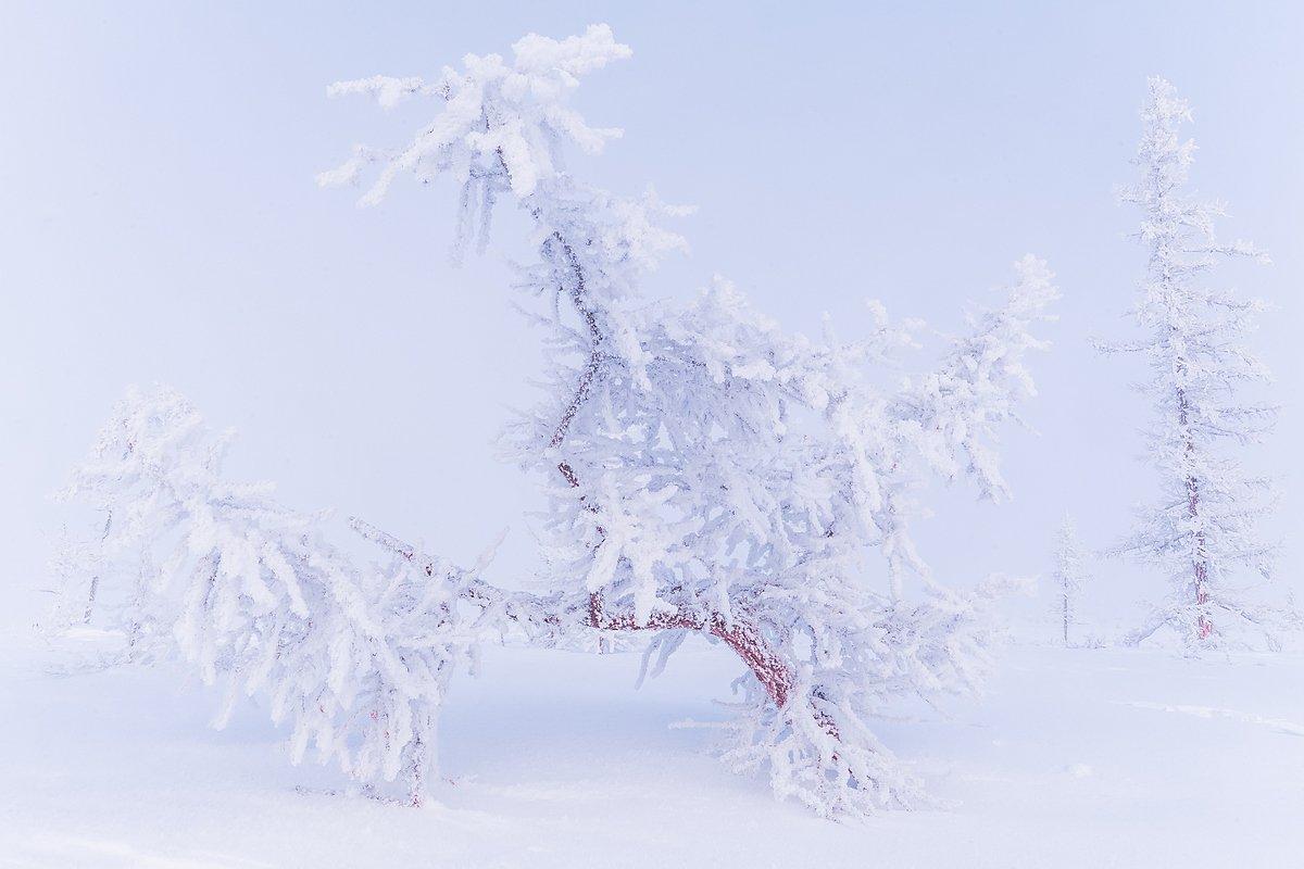 ямал, полярный урал, зима, мороз, снег, иней, лед, холод, север, russian landscape, north, yamal, urals, winter, frost, snow, ice, cold, Кирилл Уютнов