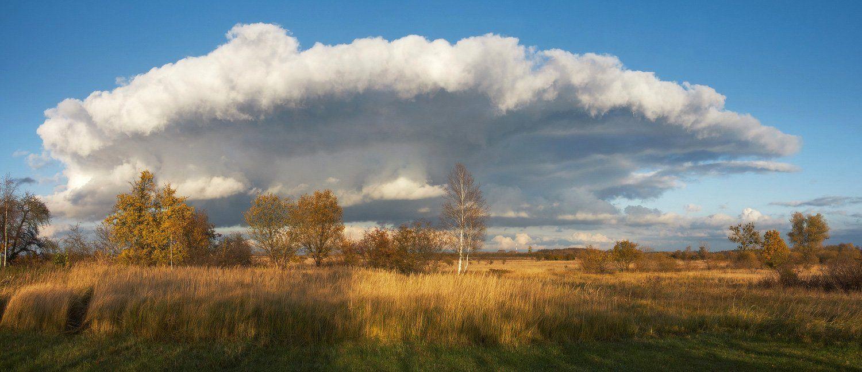 осень, облако, поле, деревья, трава, Владимир Петрукович