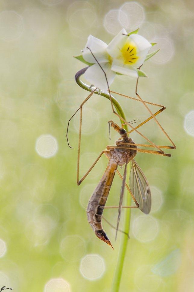 macro, makro, insect, wildlife, nature,, Mariusz Oparski