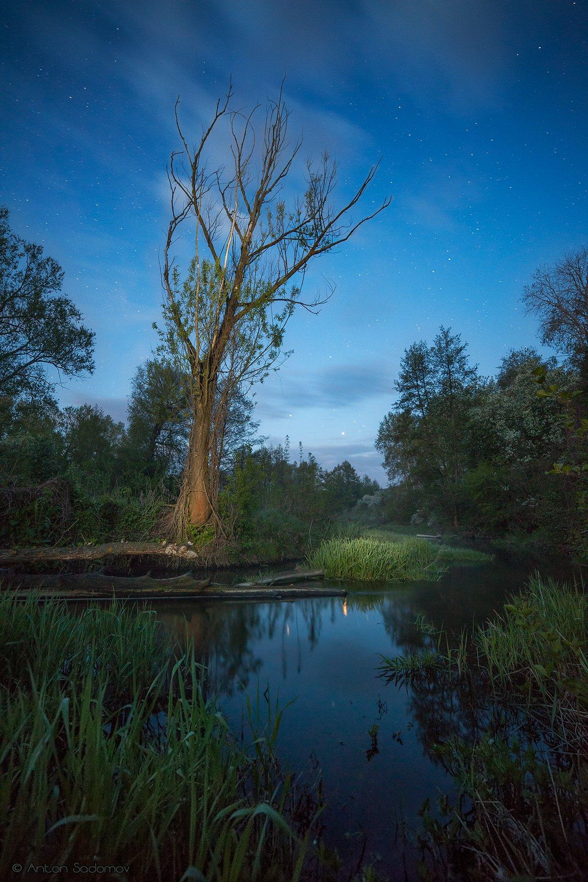 пейзаж, ночь, лес, река, вода, дерево, татищево, идолга, Антон Садомов