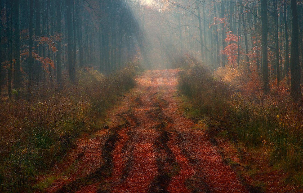 осень, утро, лес, туман, свет, лучи, дорога, Владимир