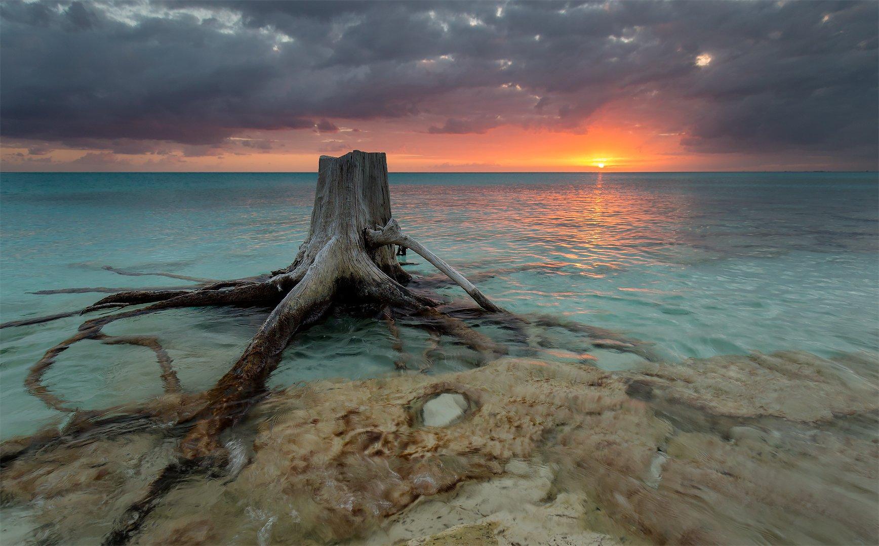 ocean, clouds, sunset, rocks, stump, root, океан, облака, закат, камни, пень, корень, G A S