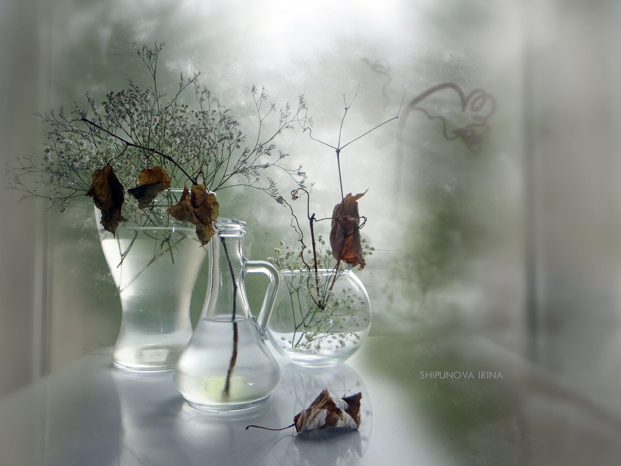 осень сухоцвет листья прозрачность стекло, Шипунова Ирина