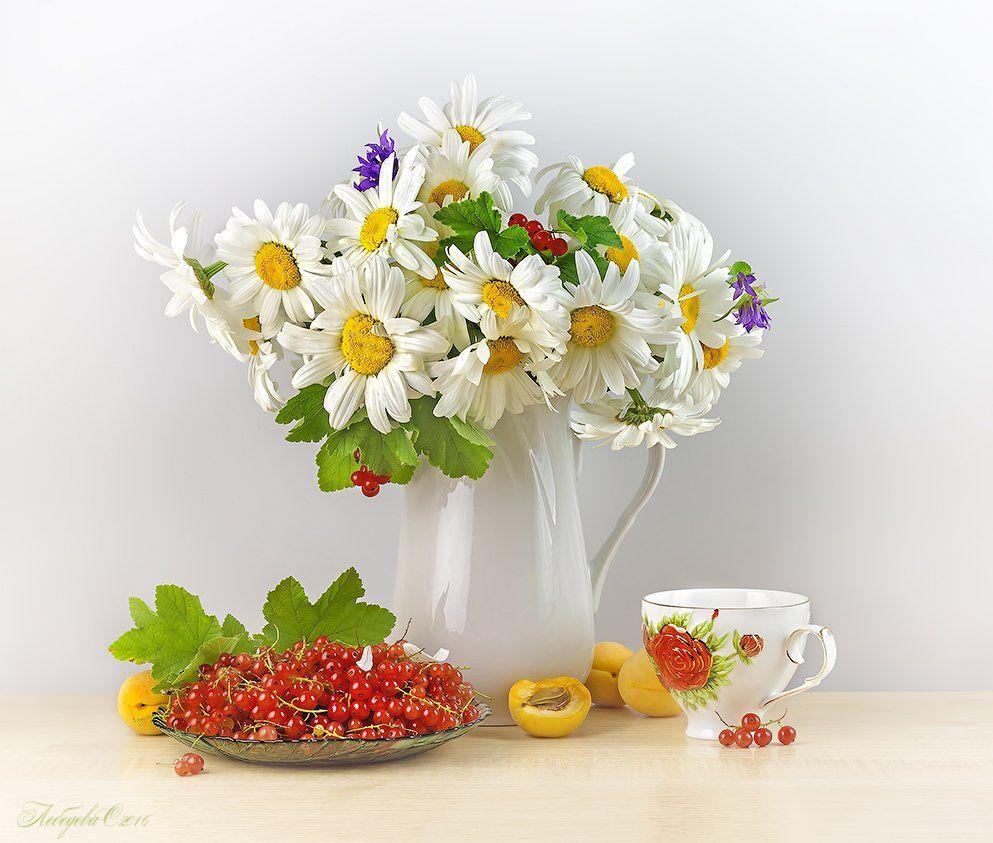 ромашки,цветы,красная смородина,абрикосы,чай, Светлана Лебедева