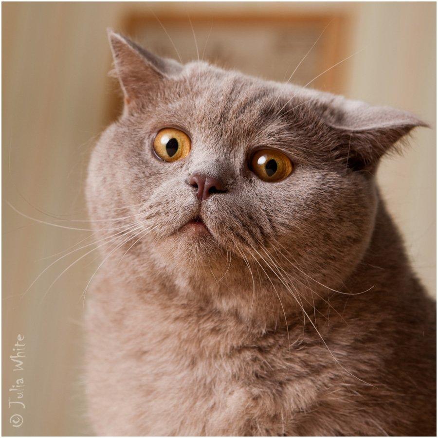кот, удивление, шок, cat, Юлия Вайт