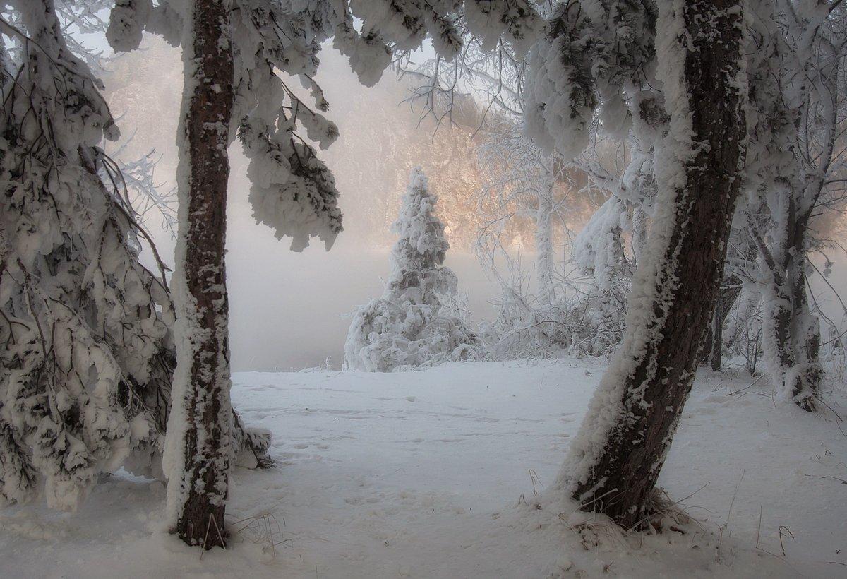 зима. мороз. енисей., Марина Фомина.