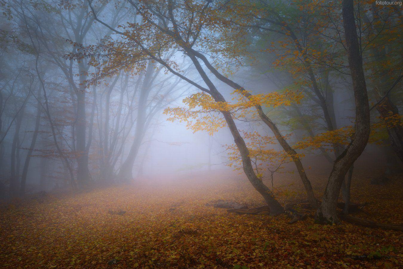 крым, лес, туман, Анатолий Гордиенко (fototour.org)