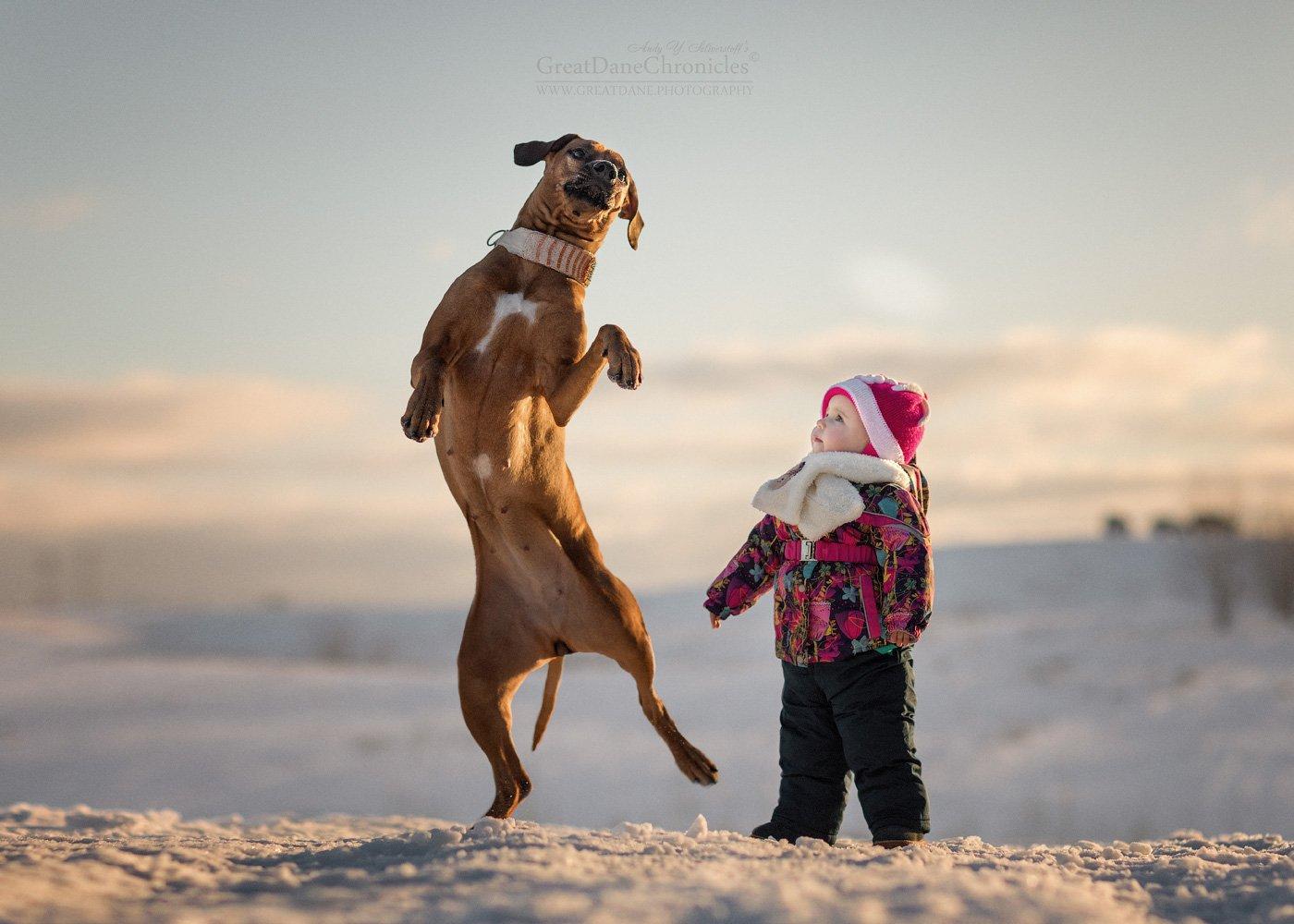 собака, риджбек, родезийский риджбек, снег, зима, солнце, Андрей Селиверстов