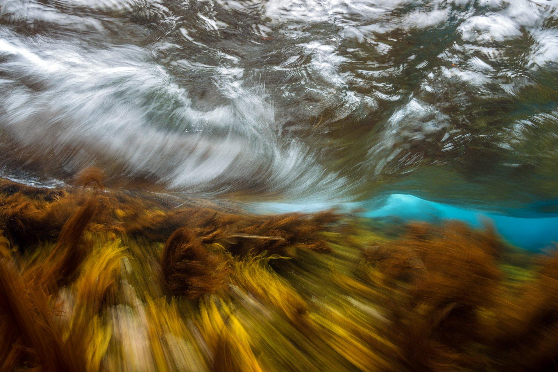 Монерон, подводное фото, underwater, Сергей Шанин