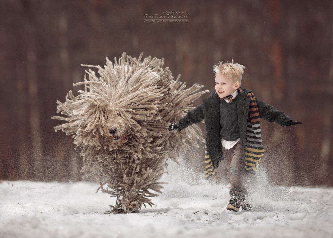 Комондор, Венгерская овчарка, Собака, Зима, Ребенок, Андрей Селиверстов