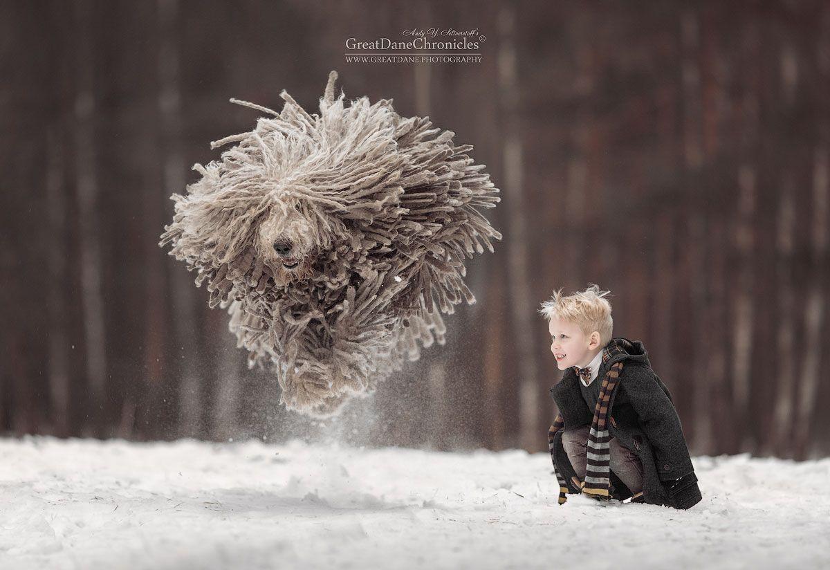 командор, венгерская овчарка, дети, зима, полет, Андрей Селиверстов