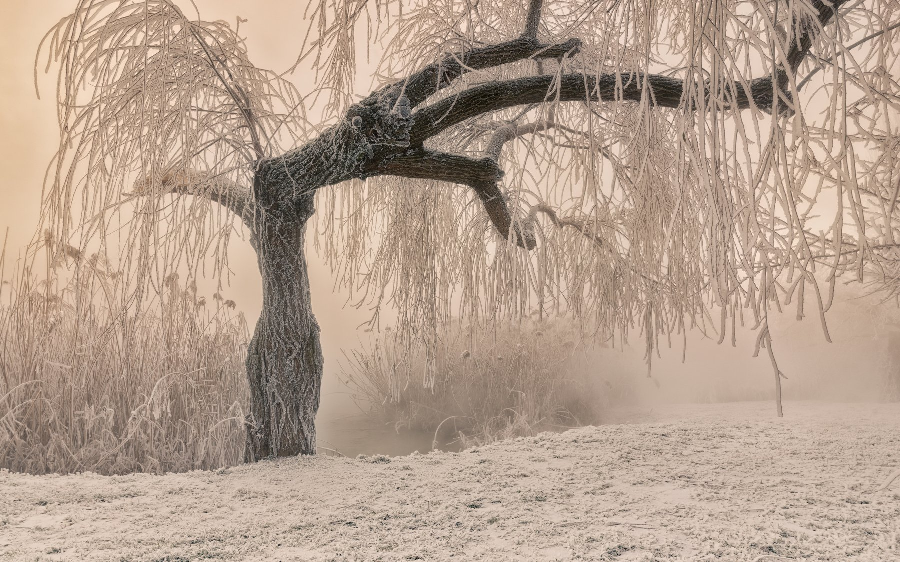 мороз, утро , туман , дерево , иней , камыш , инопланетянин, Александр Плеханов