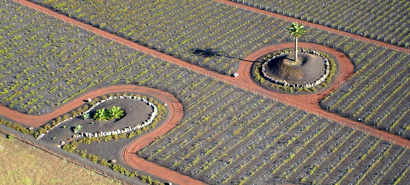 Испания, Канарские острова, Лансароте, пальмы, лоза, виноградник, Борис Резванцев