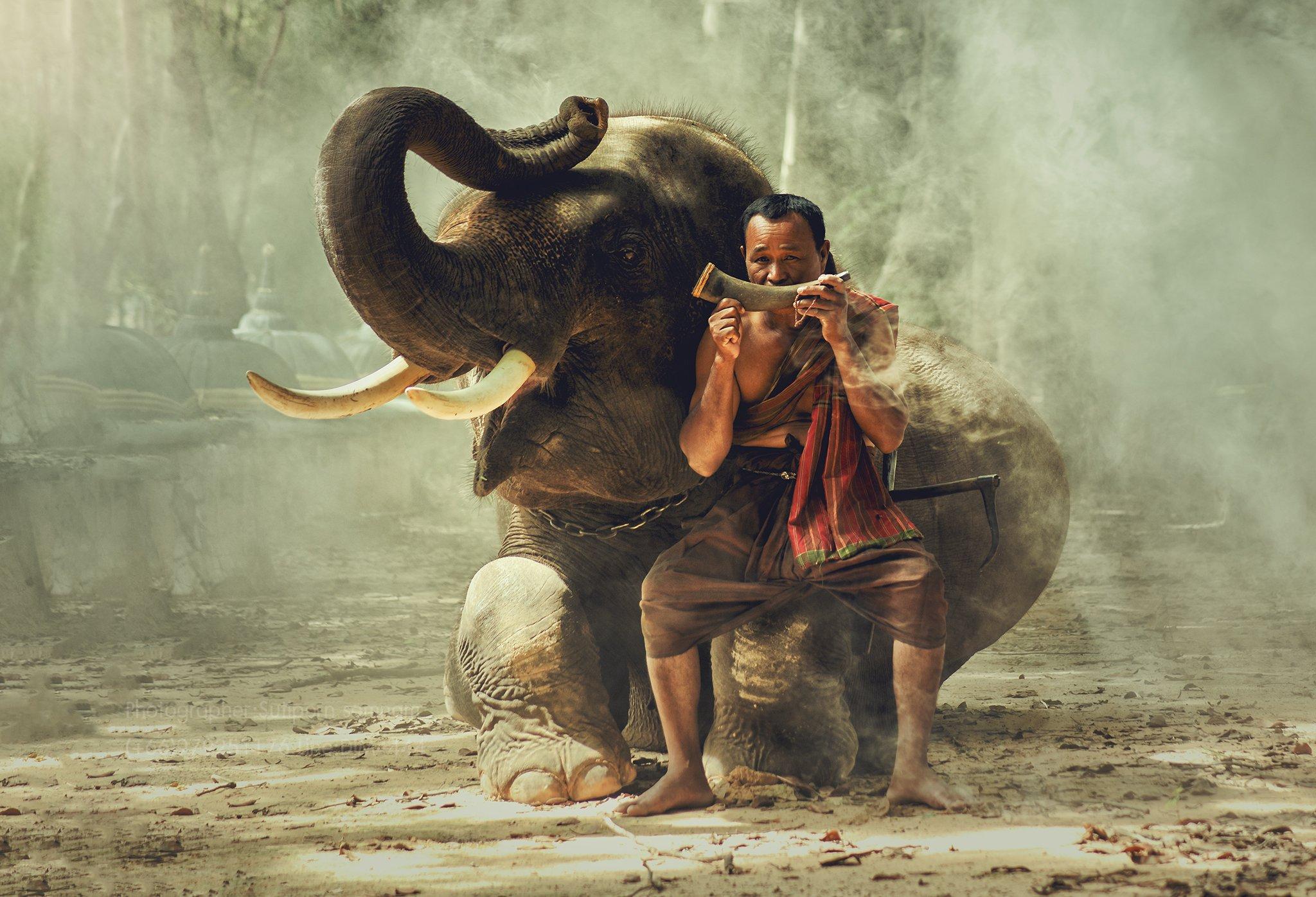 elephant,people,animal,thai,travel,, SUTIPORN SOMNAM