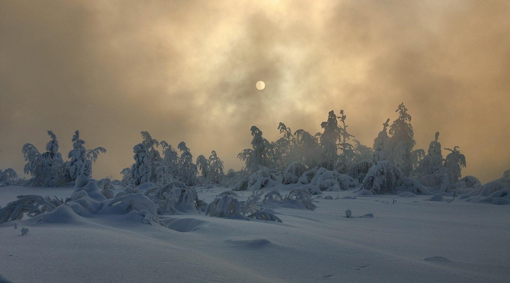 новый, год, 2017, Борис Полозков