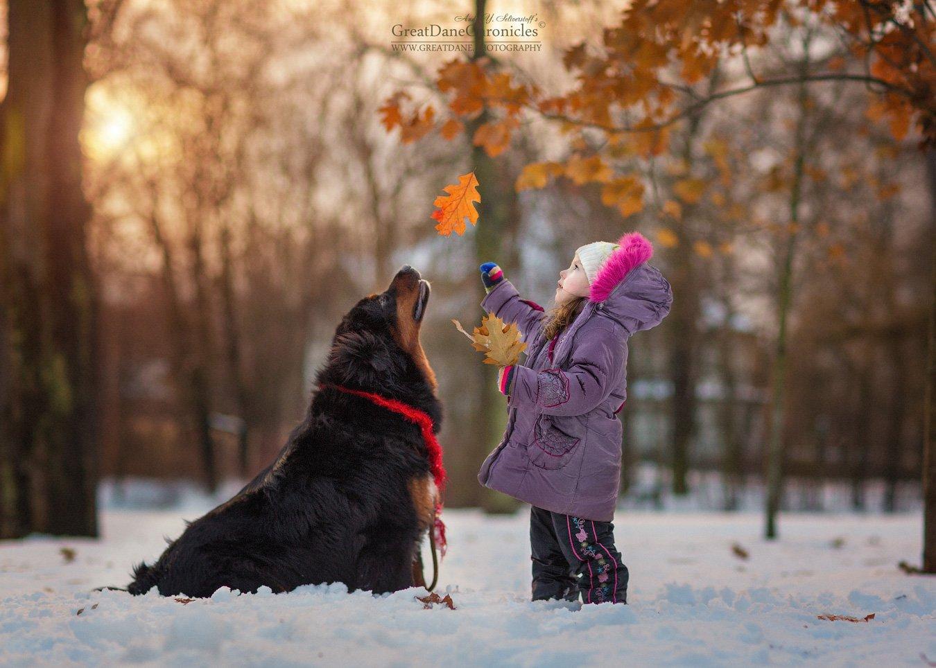тибетский мастифф, собаки, зима, дети, Андрей Селиверстов