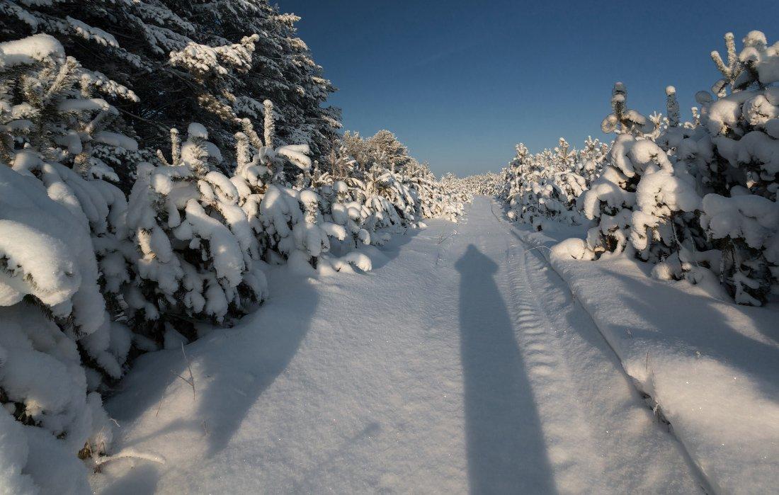 Снег сугробы просека сосны лес тень зима мороз , Георгий Машковцев