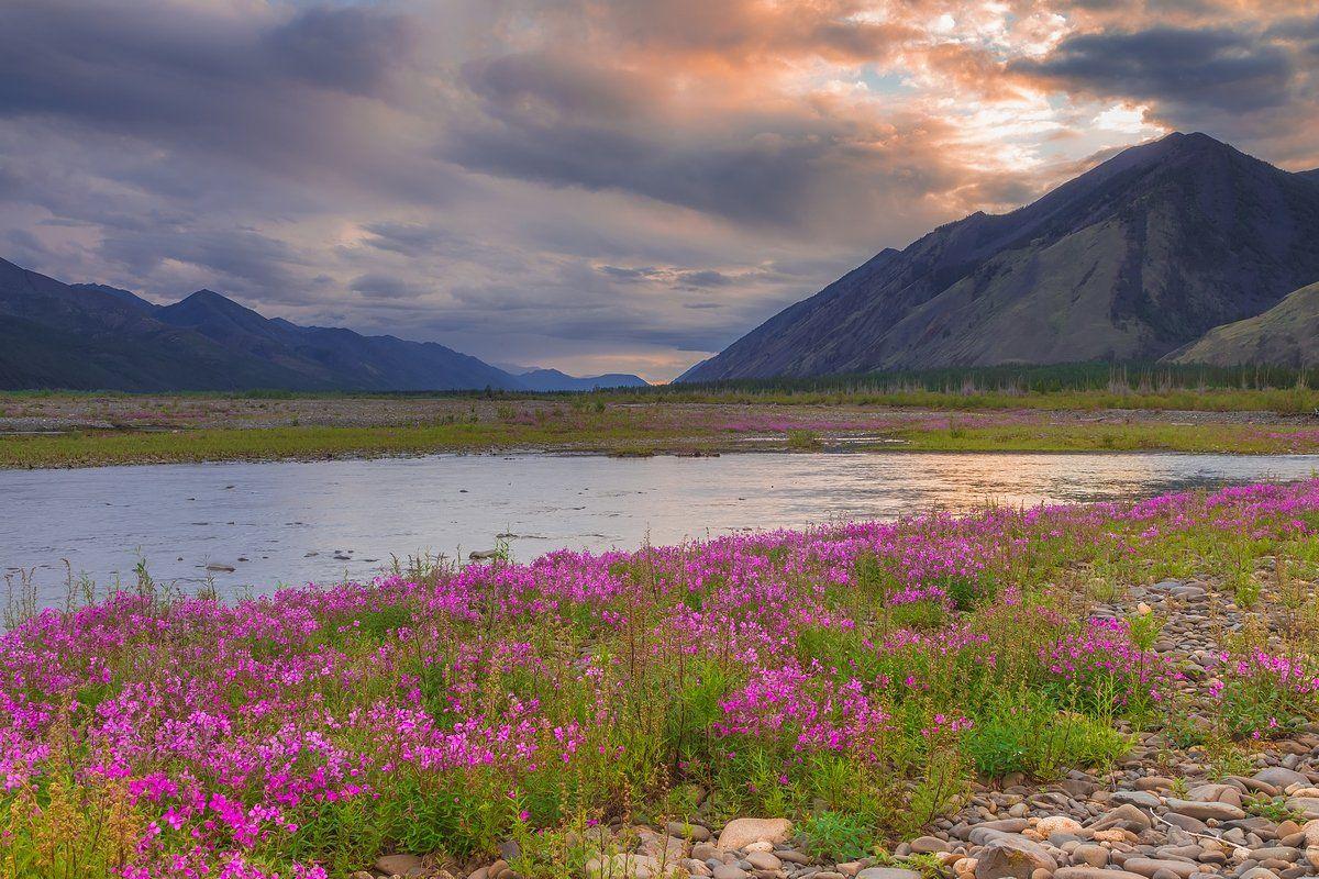 якутия, весна, цветы, фототур, Кирилл Уютнов