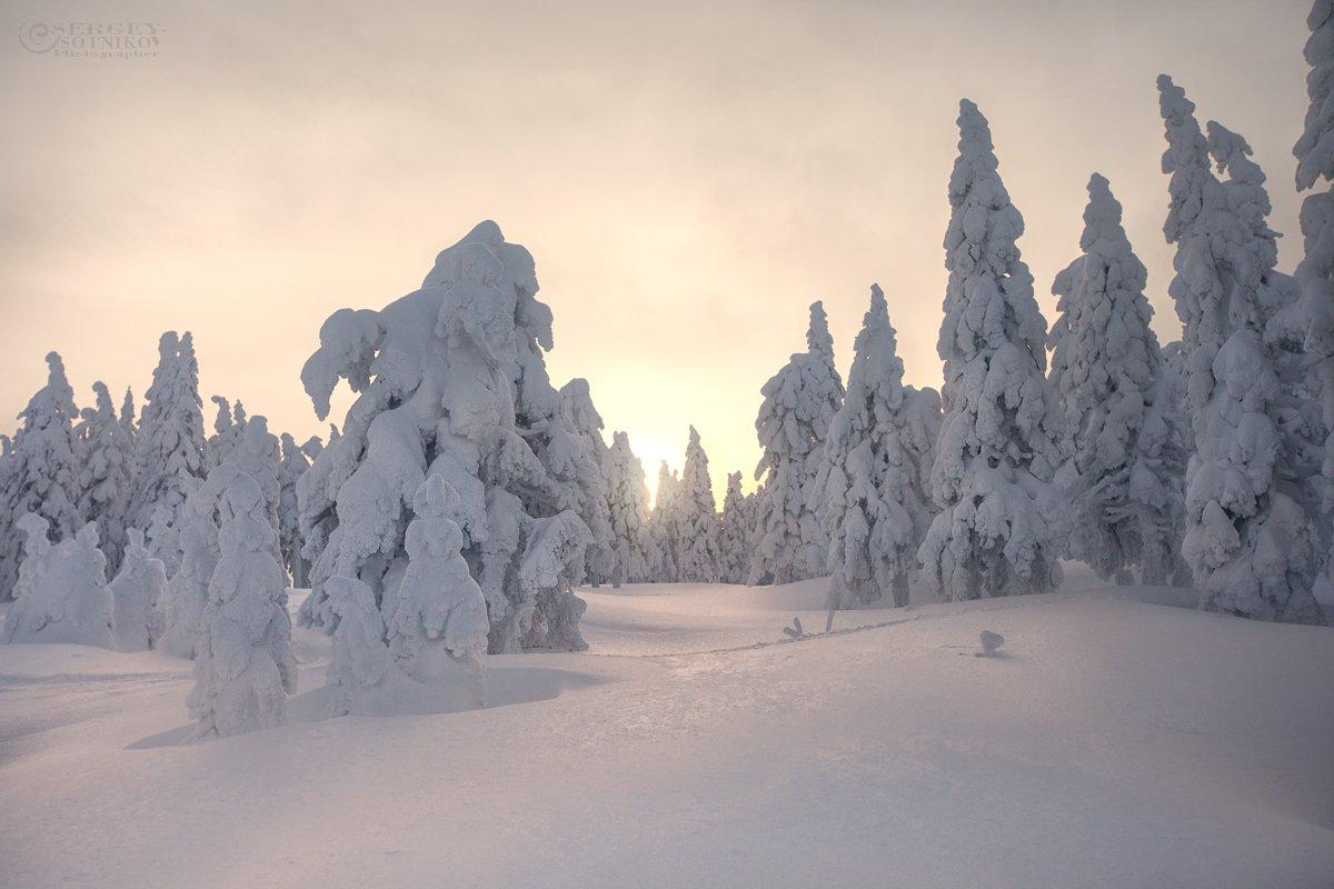 таганай зимний таганай ели снег, Сергей Сотников