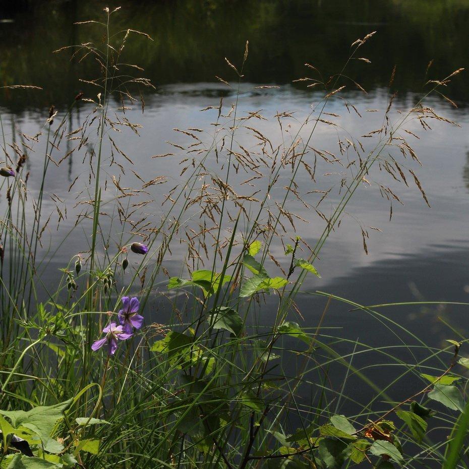 лето,озеро,олег кулаков, Олег Кулаков