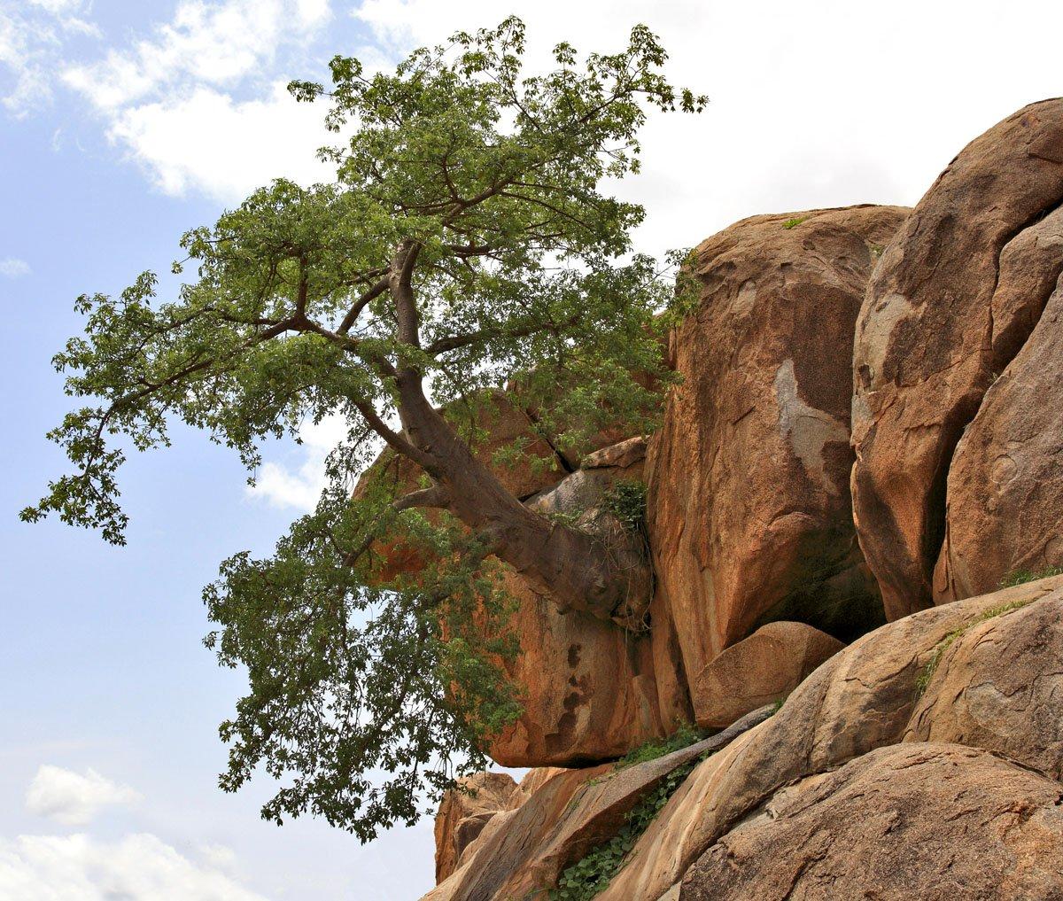 дерево, скалы, валуны, Олег Загидуллин