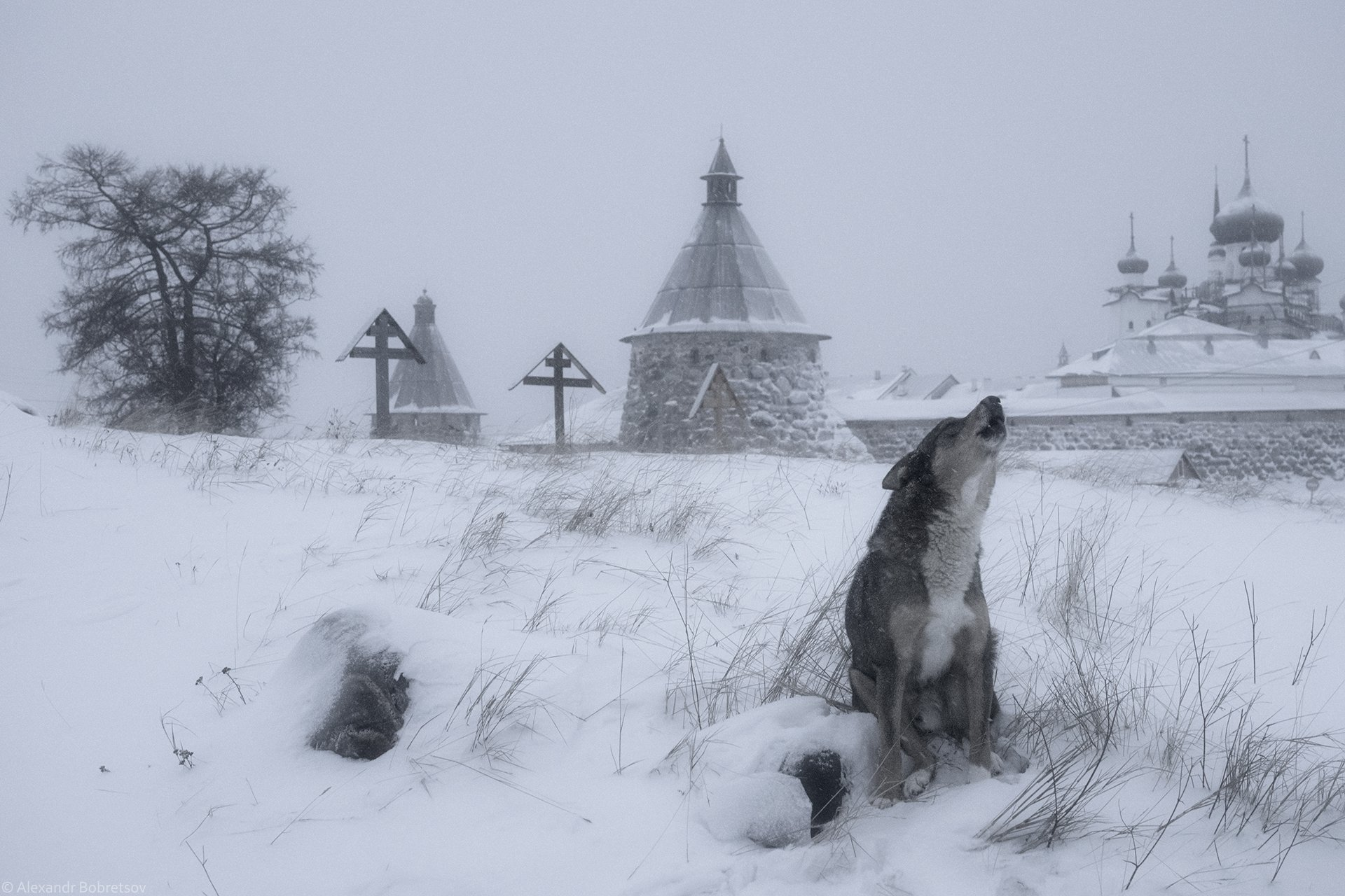 соловки, север, монастырь, фототур, Александр Бобрецов