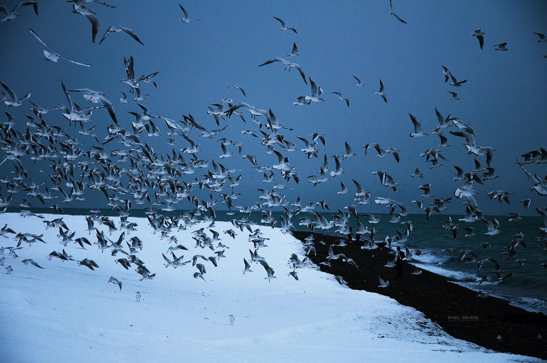 landscape, sea, winter, snow, seagulls, fling, seaside, frozen, cold, outside,, ირაკლი დოლიძე