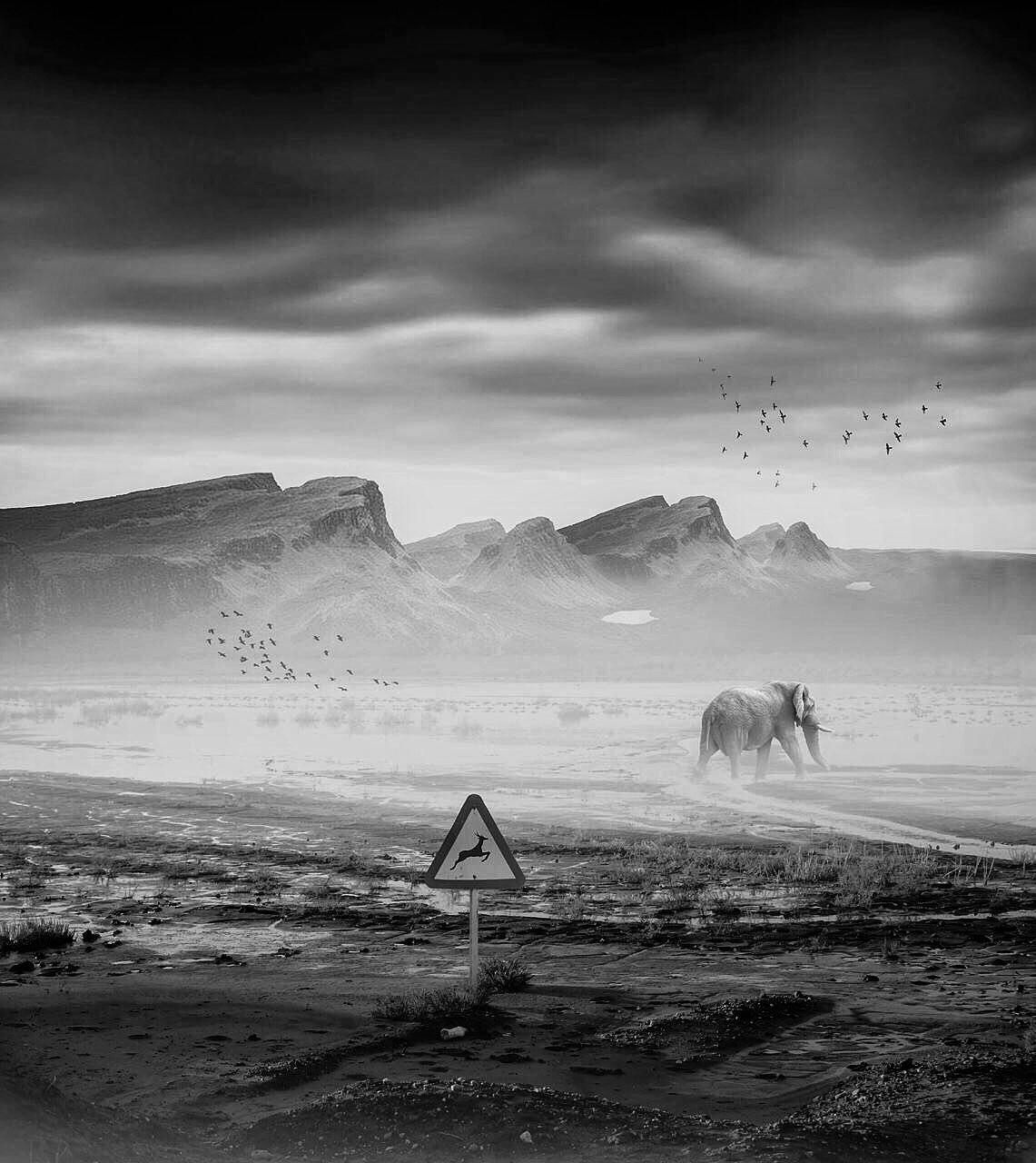 #Cross#breeding #fil #hossein_mehrzad #mehrzad_photo #fine_art #bnw #black_and_white #consept #photoshop #photomontage #mehrzad #art #dark #be_one_bw #bnw_one #bwworld_tr #bnw_rose #hossein_mehrzad #mehrzad_photo #top_bnw #bnw_of_our_world #iran_photograp, Hossein Mehrzad