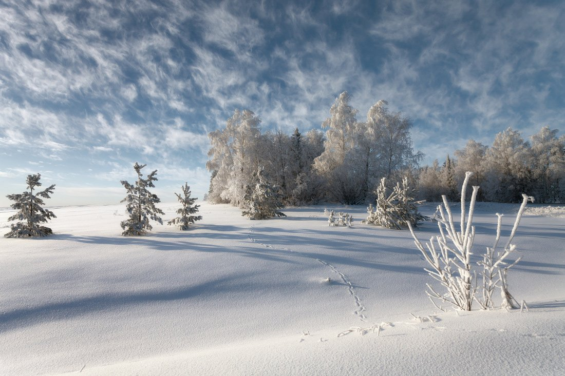 Следы снег сугробы лес зима мороз облака кружева, Георгий Машковцев