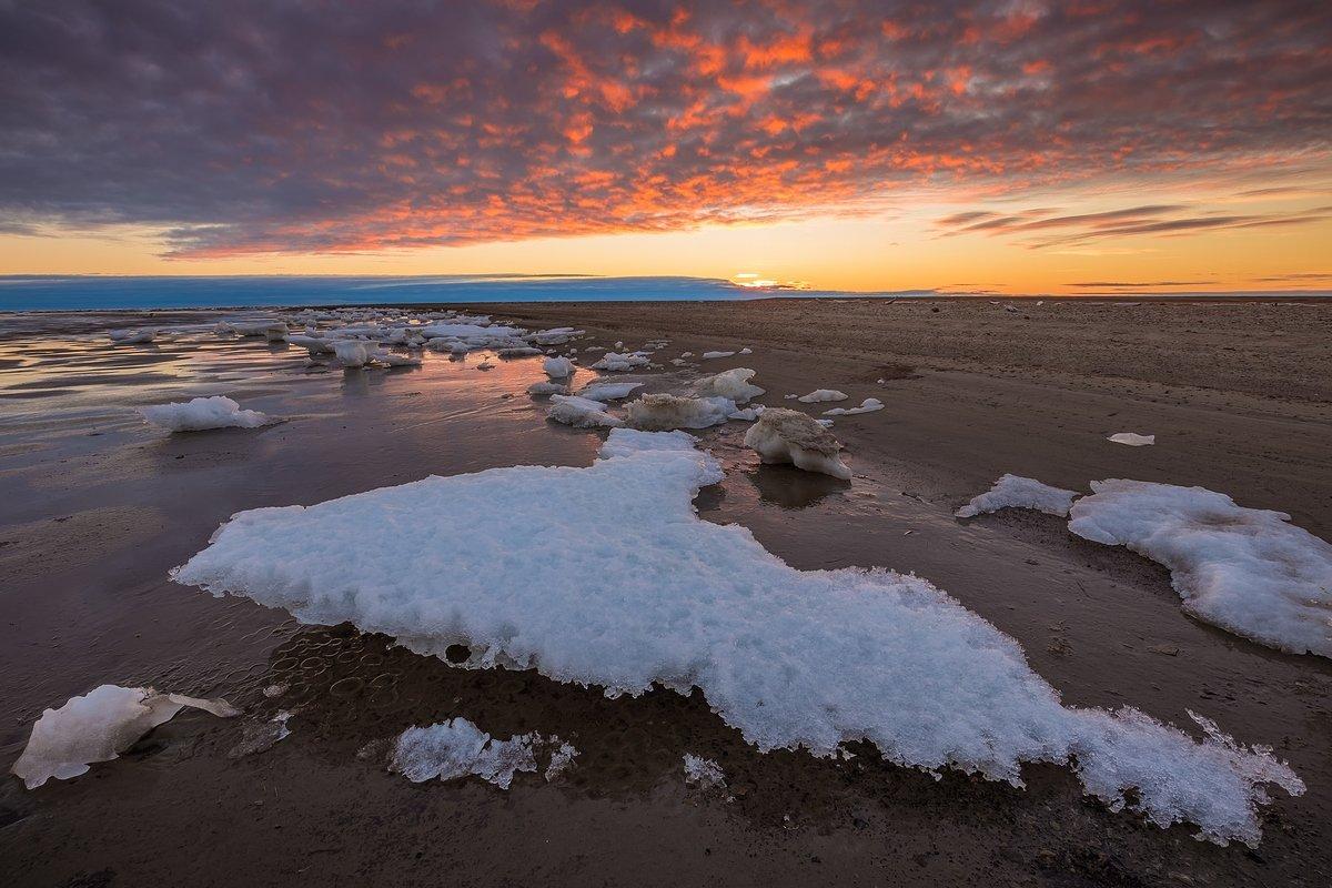 арктика, стамуха, лед, тундра, Кирилл Уютнов